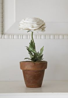 ranunculus white...