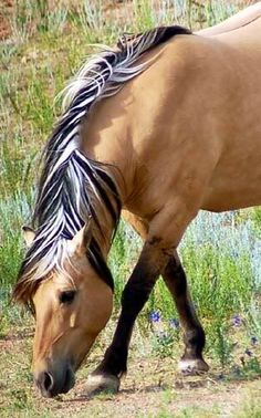 A Palomino?  Reminds me of a reverse highlight I tried once but I did not look this amazing.   .    .    .    .    .    .    .    .    .   (sami)