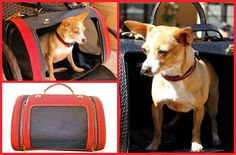 If price isn't an option, blow the bank on the Red Stingray Leather Pet Carrier. Handcrafted by b. winston designs in the USA, this posh pet carrier gives new meaning to First Class travel accommodations.