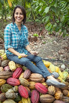 Guadalupe is a chocolate farmer in Ecuador where her family has been harvesting coco for generations. One of the ways that Heifer is working to help with rural chocolate farmers, like Guadelupe, is by providing low-interest business loans.