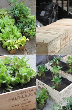 Diy: wine box vegetable garden the style files. Garden Boxes, Garden Planters, Herb Garden, Vegetable Garden, Balcony Gardening, Container Garden, Vegetable Planter Boxes, Wooden Wine Boxes, Wine Crates