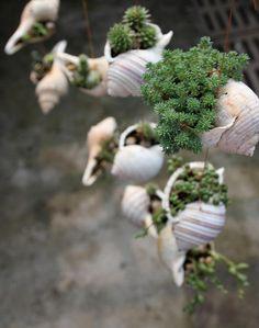 Shells!!