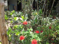 Mi jardín Silvia Cauca Colombia