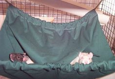 Several Different Hammocks and play things for rats. DIY