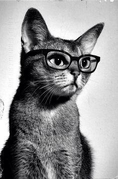 hipster kitteh is so done with it all