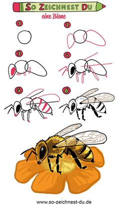 This is how you draw a bee - nimivo sites Bee Drawing, Butterfly Drawing, You Draw, Learn To Draw, Animal Paintings, Animal Drawings, Art Disney, Drawing Course, Atc Cards
