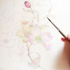 https://www.behance.net/gallery/29730357/Dogwood-in-watercolor