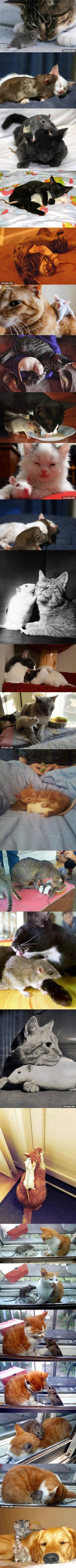 best cats images on pinterest in funny animals funny