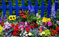 summer flowers - Google Search