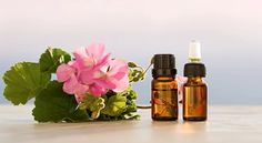 There are plenty of natural mosquito repellents, such as citronella, lemon eucalyptus, thyme oil, and geranium oil. Which repellent works the best? Essential Oil For Spiders, Are Essential Oils Safe, Geranium Oil, Geranium Essential Oil, Geranium Flower, Natural Mosquito Repellant, Candle Supplies, Oils For Dogs, Healthy Skin Care