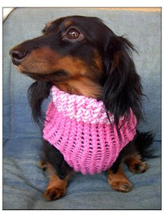 Pet Lover: Knifty Knitter - Dog Sweater!