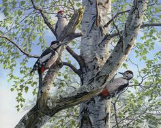 Wildlife Wild Birds Art Paintings For Sale Pictures