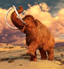 Elephants Paintings - Woolly Mammoth  by Gary Hanna