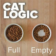 """Except our cat's """"empty"""" bowl usually has dropped food scattered all around it. Heaven forbid his highness should ever have to eat a piece off the floor!"""