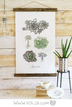 Vintage Inspired Science Posters - SEMPERVIVUM VOL.1  @Sherry @ Young House Love have you seen this beauty??