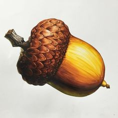 Pencil Shading, Color Pencil Art, Pencil Drawings, Botanical Art, Botanical Illustration, Vegetable Prints, Nostalgic Art, Colored Pencil Techniques, Food Drawing