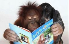 Suryia the Orangutan and Roscoe the Bluetick Coonhound: The True Story of an Unlikely Friendship Primates, Funny Animals, Cute Animals, Funny Pets, Wild Animals, Unlikely Friends, Bluetick Coonhound, Animal Books, Hound Dog