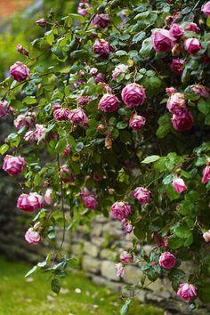 Gardens: Flowers for the #garden.