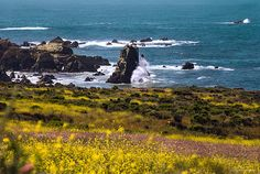 Title Spring On The California Coast By Denise Dube Artist Denise Dube Medium Photograph - Photography, Fine Art Sea Photography, Photography For Sale, Landscape Photography, Travel Photography, Central California, California Coast, Central Coast, Big Sur, Spring Flowers