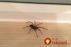 Pavúky a všetku háveď to vyženie z vášho domu: Najlepšia rada, ako udržať byt bez hmyzu na celé mesiace! Home Hacks, Silk Flowers, Declutter, Diy Tutorial, Spider, Insects, Projects To Try, Cleaning, Weddings
