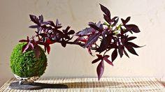 Le kokedama peut se développer autrement qu'à la verticale : il sera encore plus proche de l'art nipponne de l'ikebana.