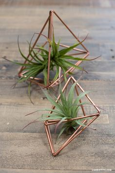 DIY Copper Pipe Succulent Holders {Lia Griffith}