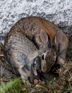 Don't Wear Fur... Bunnies have Mommies Too #peta