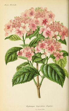 Anne 1868 - Revue horticole. - Biodiversity Heritage Library