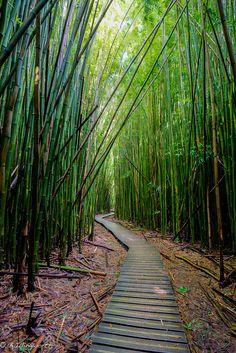 Pipiwai Trail, Haleakala National Park, Maui, Hawaii