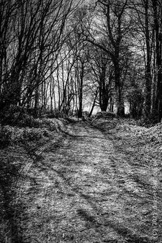 Tracks left behind in a forest within Dorset. #dorset #forest #photography #photooftheday #blackandwhite #blackandwhitephotography #monochrome