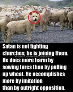 """""""""""Beware of false prophets who come to you in sheep's clothing but inwardly are ravaging wolves."""" Matthew ~The Bible Christian Life, Christian Quotes, Christian Posters, Christian Warrior, Bible Quotes, Bible Verses, Holy Mary, Moral, Bible Truth"""
