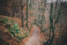 I live to walk, hike, explore, and be outdoors. Campfire Songs, Forest Falls, Nice Photos, Autumn Forest, Secret Places, Righteousness, Christmas 2014, Adventure Awaits, Heavens
