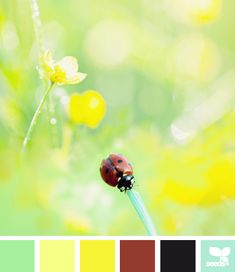 VOICE VALUES COLOR PALETTE: Bright, happy, lightened up versions of primary colors make this is a terrific palette for a high Playfulness value. | ladybug brights | via Design-Seeds | commentary via The Voice Bureau at AbbyKerr.com