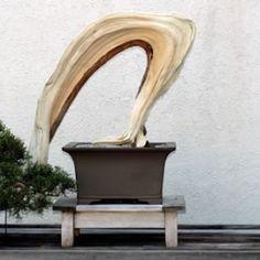 Bonsai… North American Collection