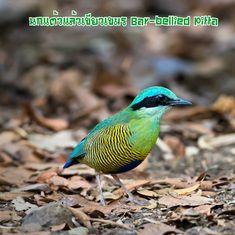 Pretty Birds, Beautiful Birds, Birds 2, Colorful Birds, Fauna, Bird Art, Cute Animals, Wildlife, Pitta
