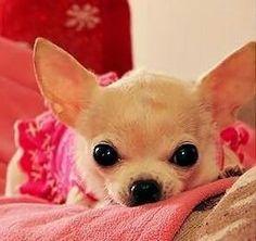 omg tooo cute