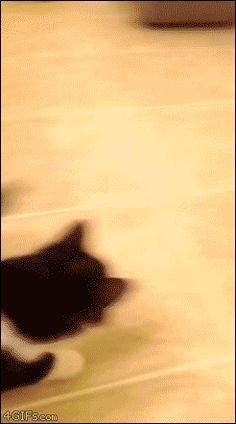 21 Best GIFs Of All Time Of The Week #132