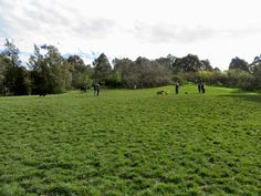 Off leash at Darebin Parklands, Alphington | dog park | Melbourne | Pupbeat