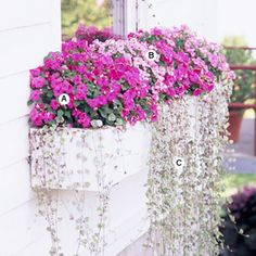 Easy Recipes for Window Boxes in Shade 2019 Maximize the Power of Pink A. Impatiens 'Accent Pink' 4 B. Impatiens 'Pink Swirl' 4 C. Dichondra 'Silver Falls The post Easy Recipes for Window Boxes in Shade 2019 appeared first on Flowers Decor. Window Box Plants, Window Box Flowers, Container Plants, Container Gardening, Container Vegetables, Succulent Containers, Gardening Books, Container Flowers, Gardening Quotes