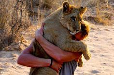 """Saving Sirga"" the lioness on Netflix. What a remarkable bond between this wonderful guy and Sirga. Kevin Richardson, I Love Cats, Big Cats, Cute Cats, Animals And Pets, Cute Animals, Wild Animals, Life In Paradise, Lion Photography"