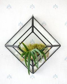Mount this clear glass wall sconce anywhere with a small nail, or suction cup for a window. Perfect for displaying air plants! $65 www.mooreaseal.com