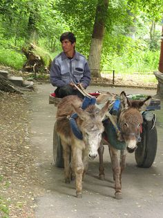 Donkey Cart. Tashkent
