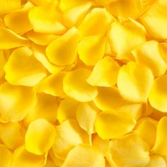 Add a splash of decoration to your wedding or event with  fresh rose petals! Rose petals can be used for any number of decorative purposes including lining an aisle, for tossing, filling a flower girl's basket, creating an intimate bedroom or bathroom setting or driving customers or guests to a particular location with a petal trail. Order fresh rose petals for your next wedding or event from The Grower's Box!