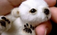 Image result for real bears