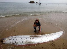 Mysterious oarfish of the deep washes up on California island - Yahoo News