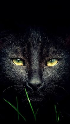 I love my black cat ~ Bela Lugosi