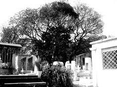 Imagen de un árbol rodeado de tumbas