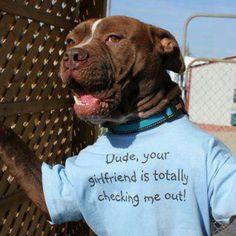 Pit bull dog lover
