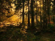 in the blaze of the Sun Ulka, Ukraine