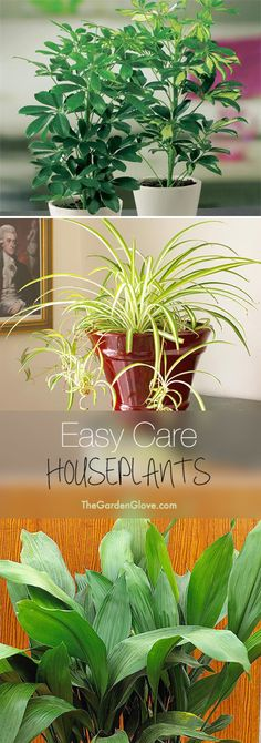 Easy Care Houseplants • Tips & ideas for easy to grow and hard to kill houseplants!